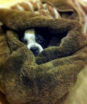 ležišče za psa